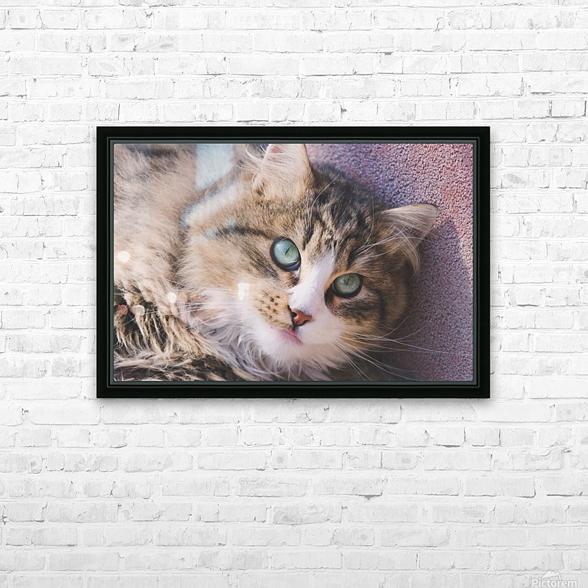 March Cat HD Sublimation Metal print with Decorating Float Frame (BOX)