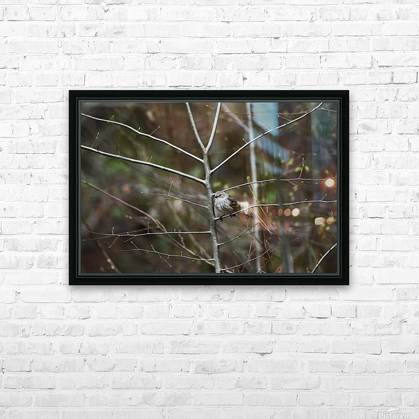 Yellow-rumped Warbler 2 HD Sublimation Metal print with Decorating Float Frame (BOX)