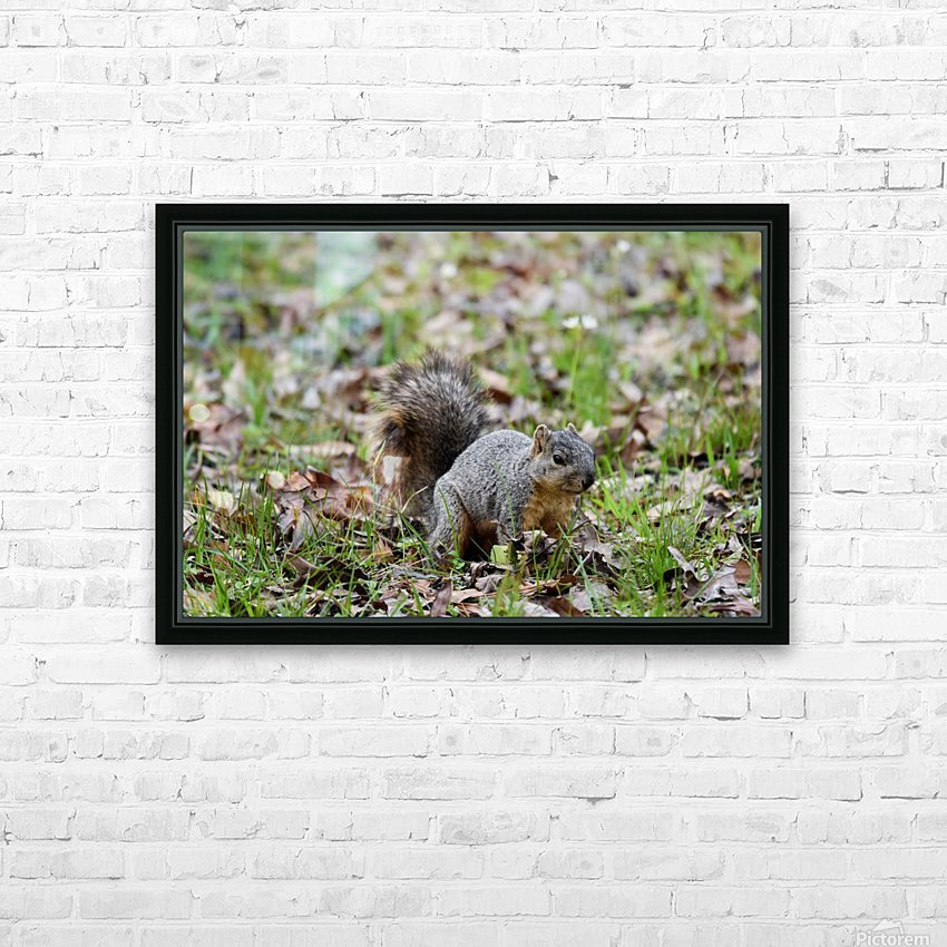 Squirrel 2 HD Sublimation Metal print with Decorating Float Frame (BOX)