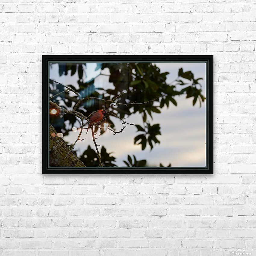 Cardinal 2 HD Sublimation Metal print with Decorating Float Frame (BOX)