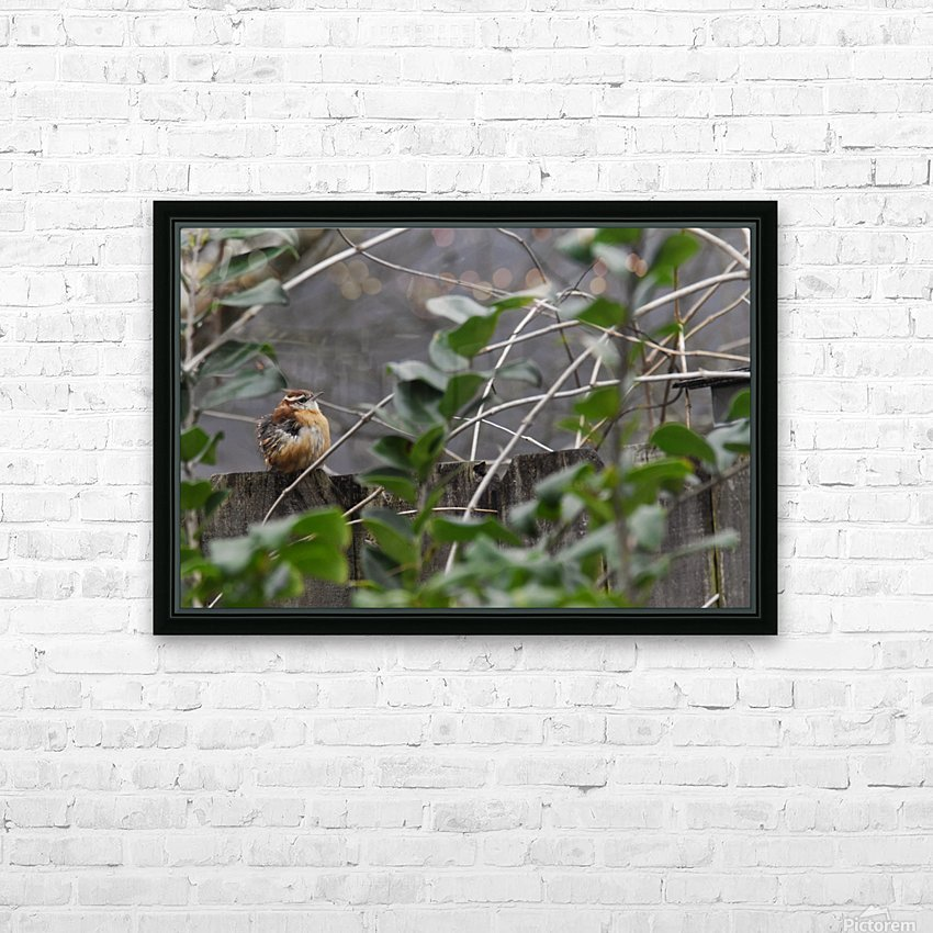 Young Carolina Wren HD Sublimation Metal print with Decorating Float Frame (BOX)