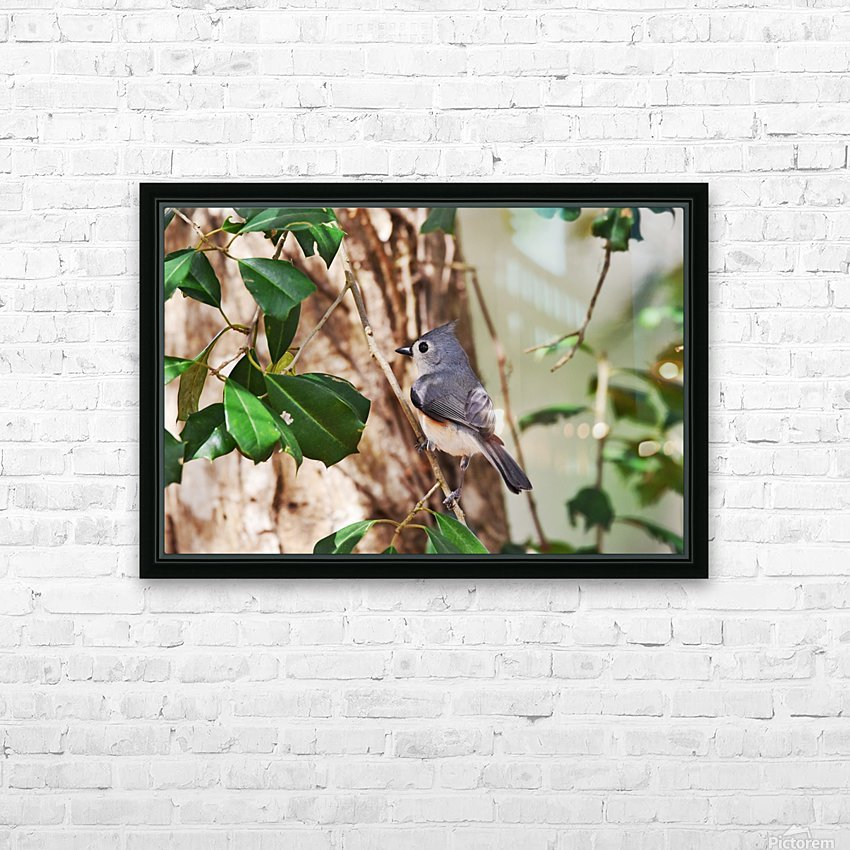 Tufted Titmouse HD Sublimation Metal print with Decorating Float Frame (BOX)