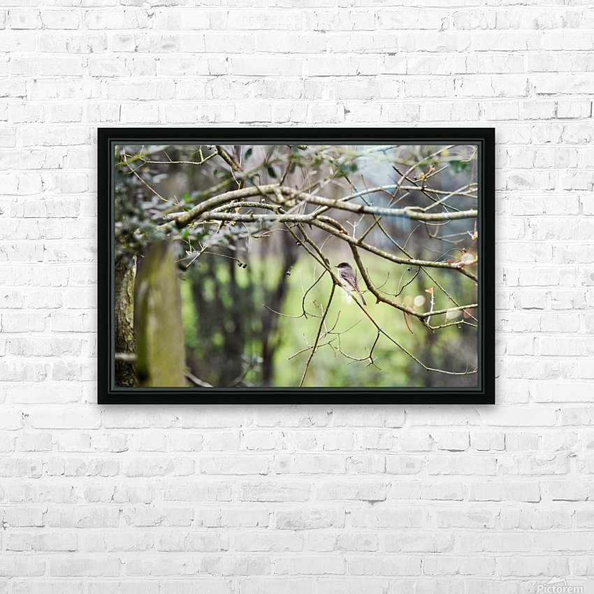 Eastern Phoebe HD Sublimation Metal print with Decorating Float Frame (BOX)