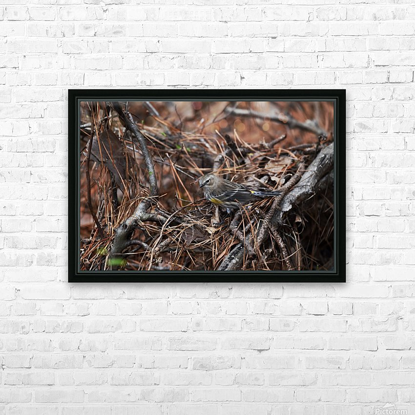 Yellow-rumped warbler HD Sublimation Metal print with Decorating Float Frame (BOX)