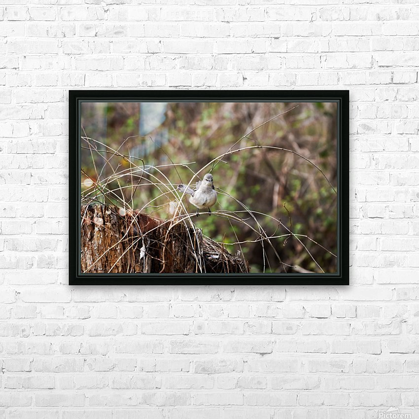 Angry Mockingbird 3 HD Sublimation Metal print with Decorating Float Frame (BOX)