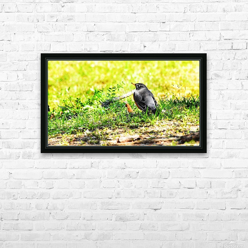 Vivid Robin HD Sublimation Metal print with Decorating Float Frame (BOX)