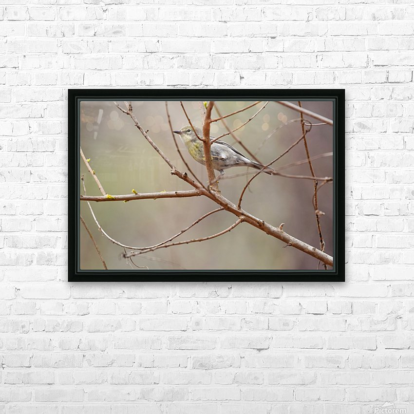 Yellow-rumped Warbler 3 HD Sublimation Metal print with Decorating Float Frame (BOX)