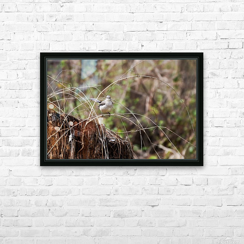 Angry Mockingbird 2 HD Sublimation Metal print with Decorating Float Frame (BOX)