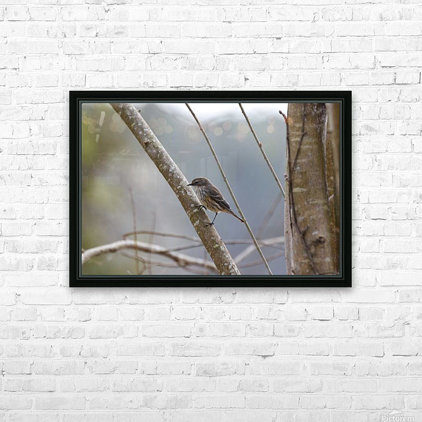 Yellow-rumped Warbler 4 HD Sublimation Metal print with Decorating Float Frame (BOX)