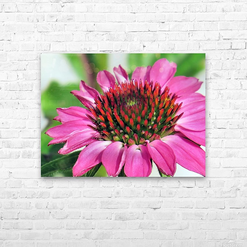 Pink coneflower  HD Sublimation Metal print with Decorating Float Frame (BOX)