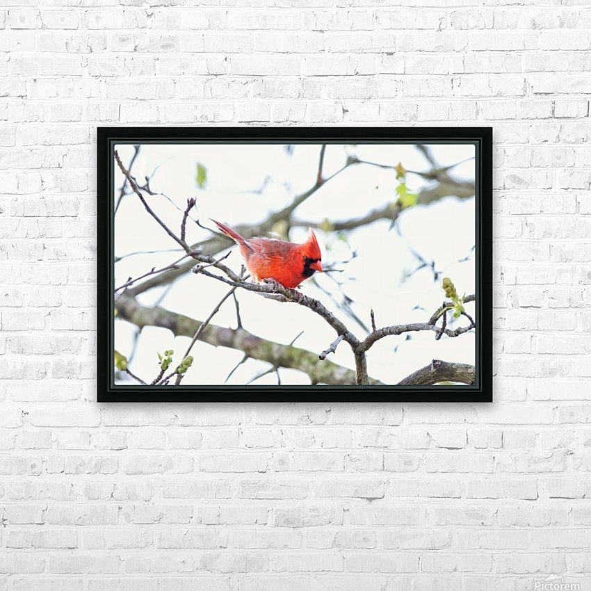 attack Cardinal HD Sublimation Metal print with Decorating Float Frame (BOX)