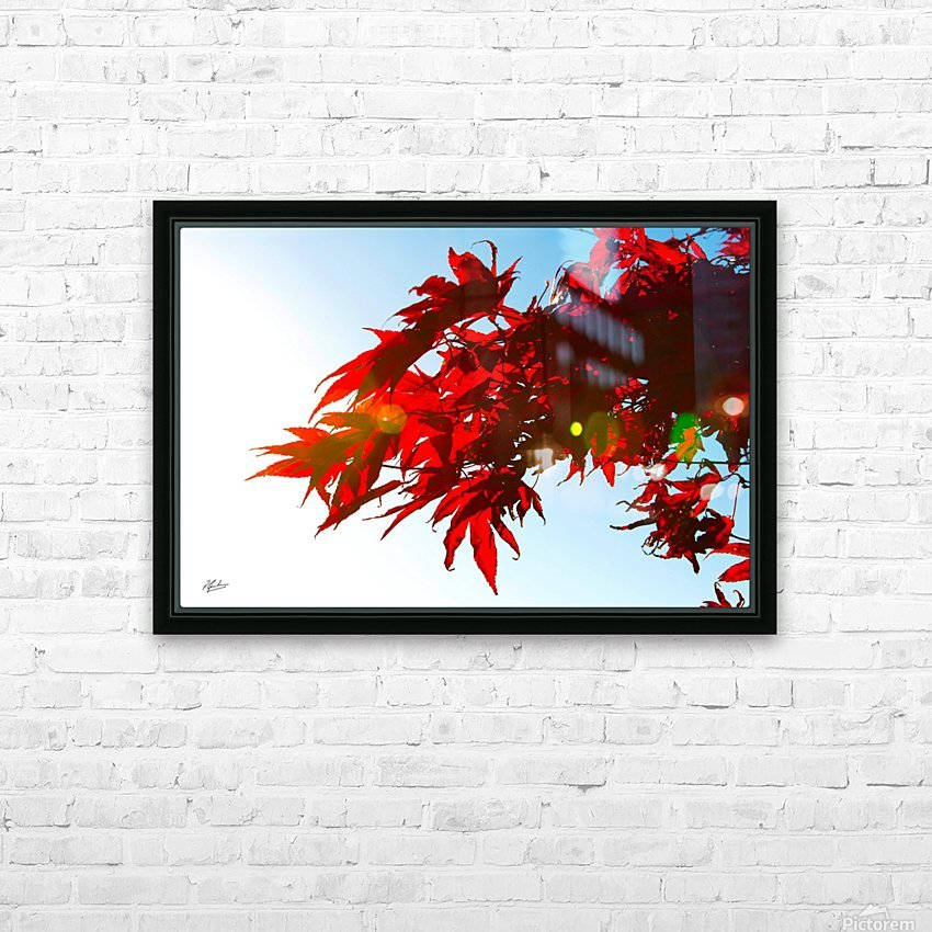 Chinese Maple HD Sublimation Metal print with Decorating Float Frame (BOX)