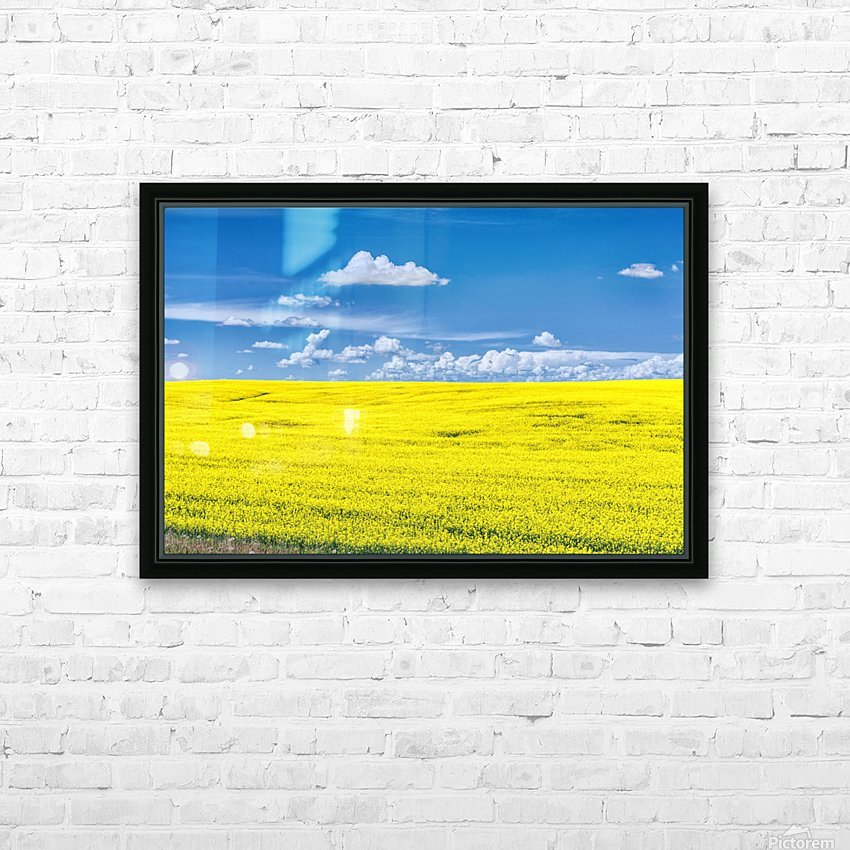 Canola Field  HD Sublimation Metal print with Decorating Float Frame (BOX)