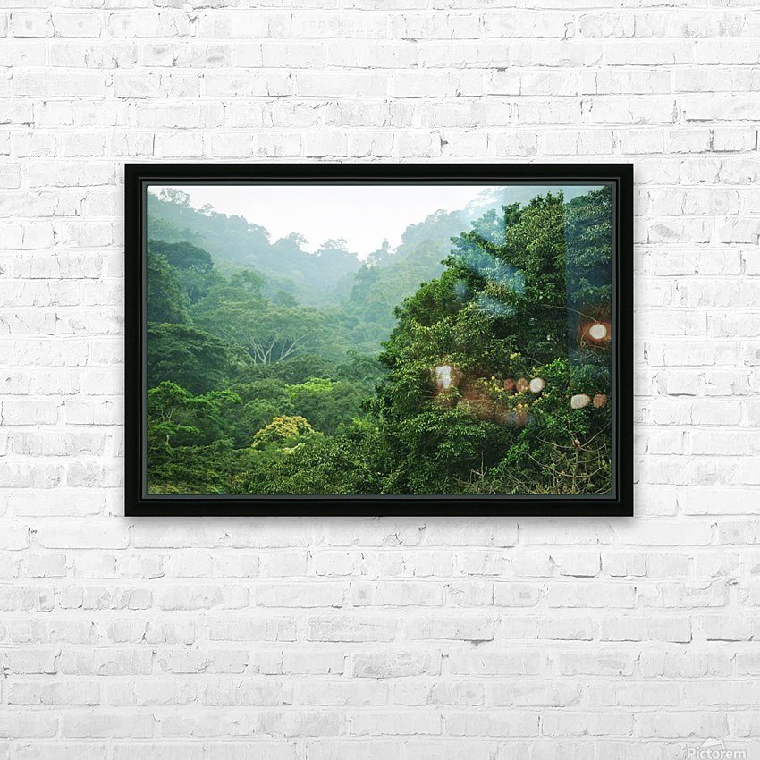Rainforest Canopy HD Sublimation Metal print with Decorating Float Frame (BOX)