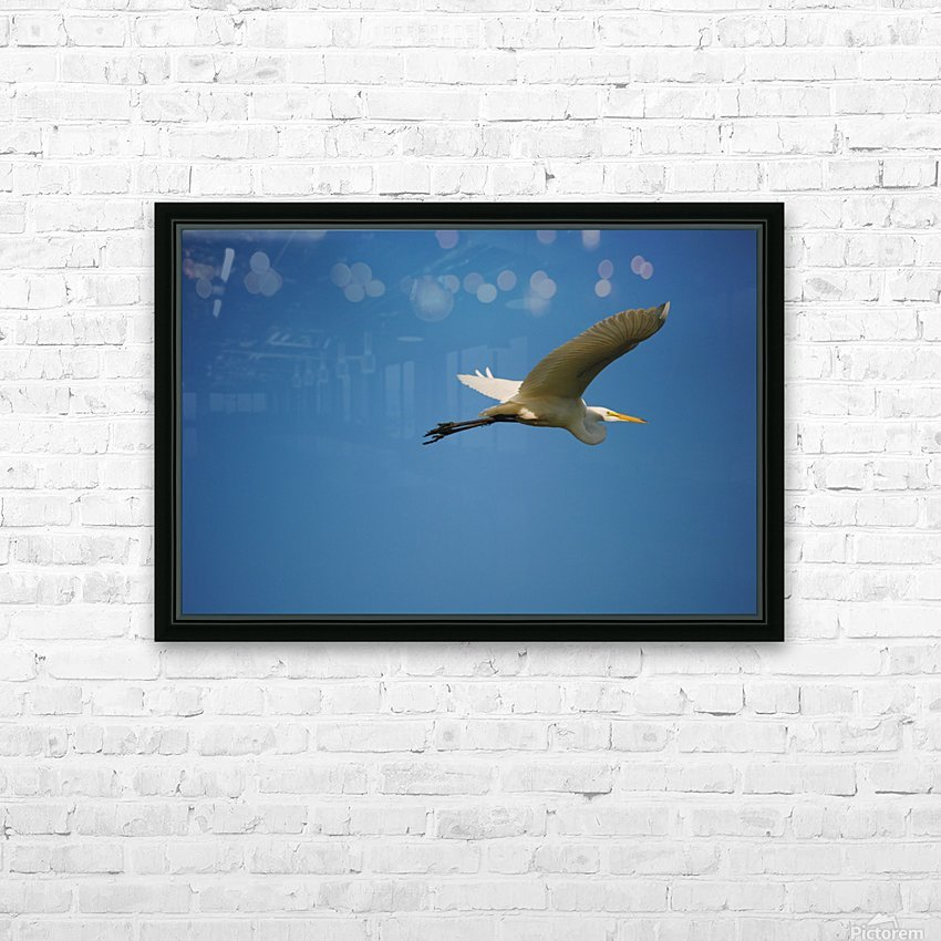 Egret Flying HD Sublimation Metal print with Decorating Float Frame (BOX)