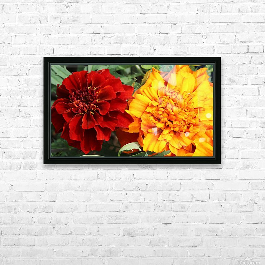 Red and Yellow Marigolds 062718 HD Sublimation Metal print with Decorating Float Frame (BOX)