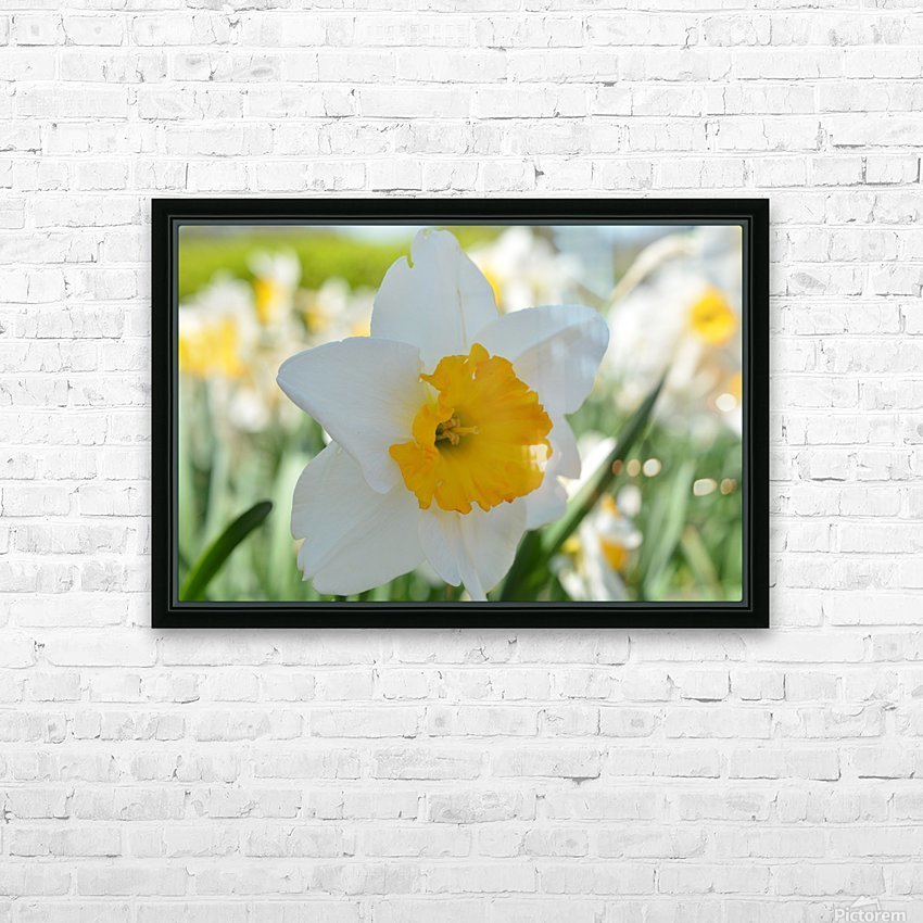 White Daffodil Photograph HD Sublimation Metal print with Decorating Float Frame (BOX)