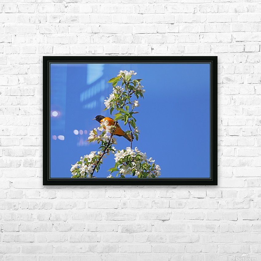 Oriole And White Blossoms HD Sublimation Metal print with Decorating Float Frame (BOX)
