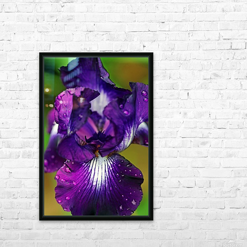 Purple With White Splash Iris HD Sublimation Metal print with Decorating Float Frame (BOX)