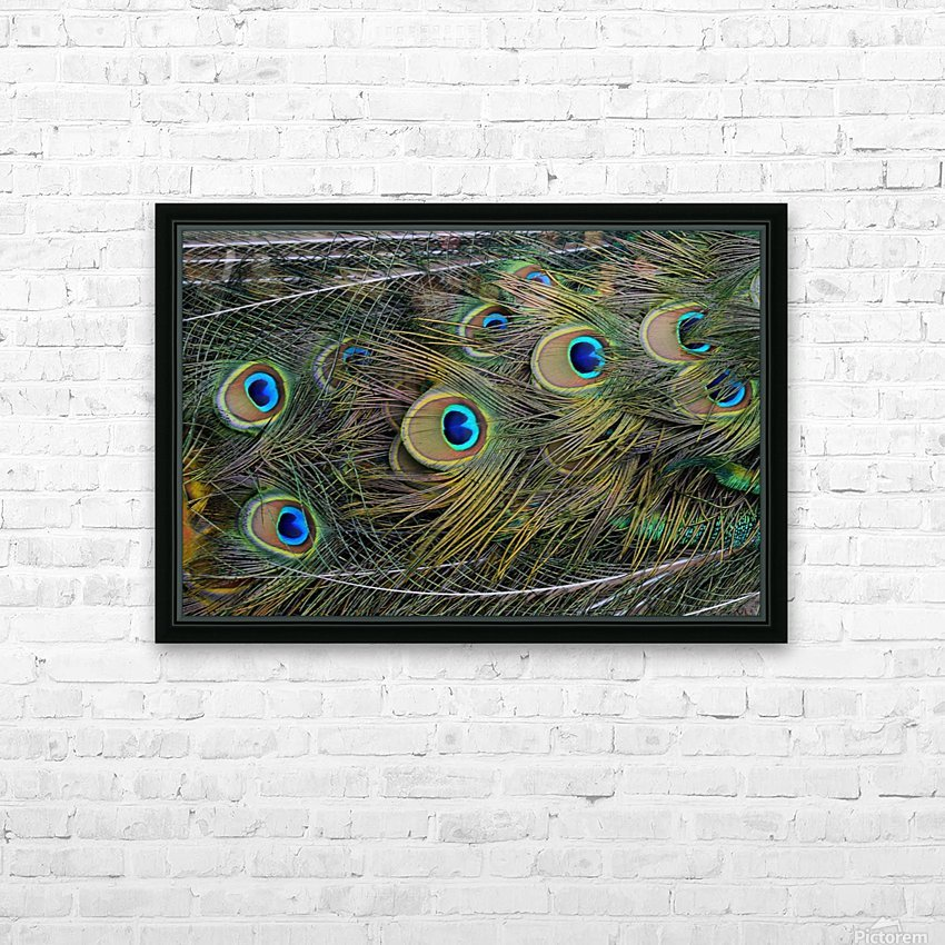 peacock tail feathers close up HD Sublimation Metal print with Decorating Float Frame (BOX)