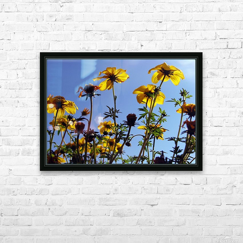 Summer Sky Flowers 1 HD Sublimation Metal print with Decorating Float Frame (BOX)