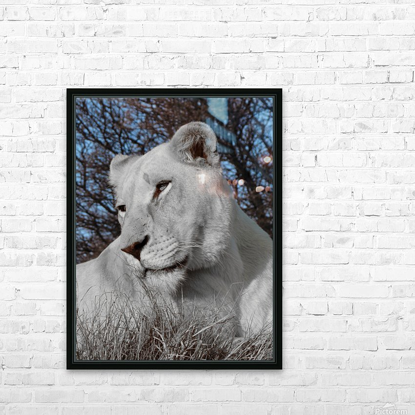 White Lion Female 1030593 HD Sublimation Metal print with Decorating Float Frame (BOX)