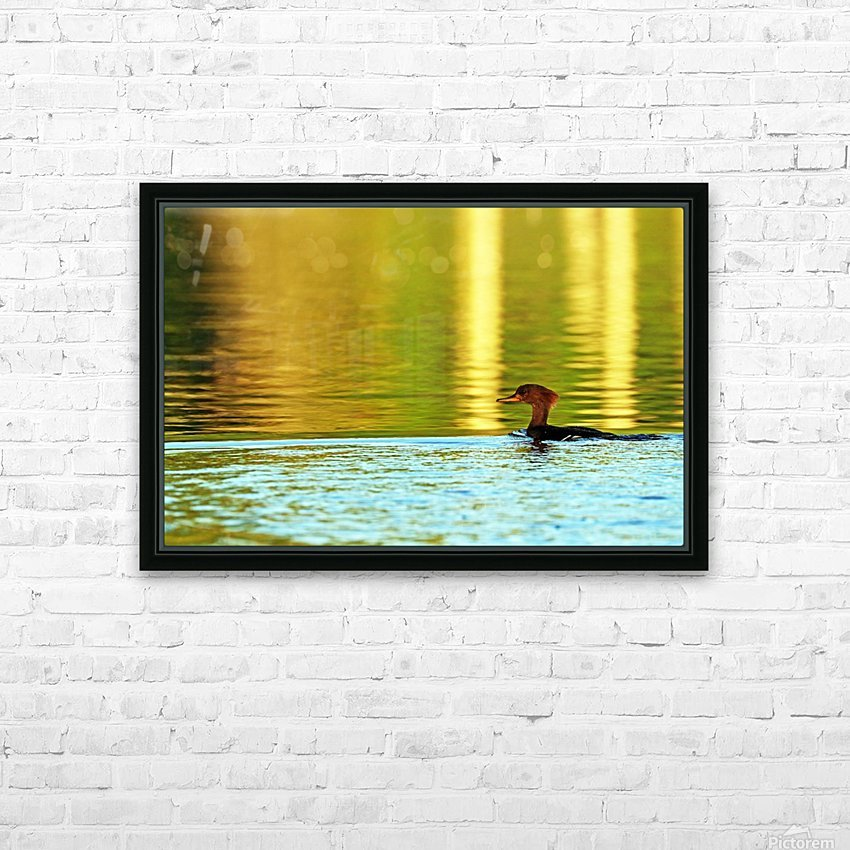 Merganser In Setting Sun HD Sublimation Metal print with Decorating Float Frame (BOX)