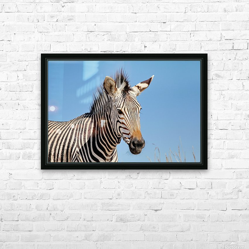 Zebra 5091 HD Sublimation Metal print with Decorating Float Frame (BOX)