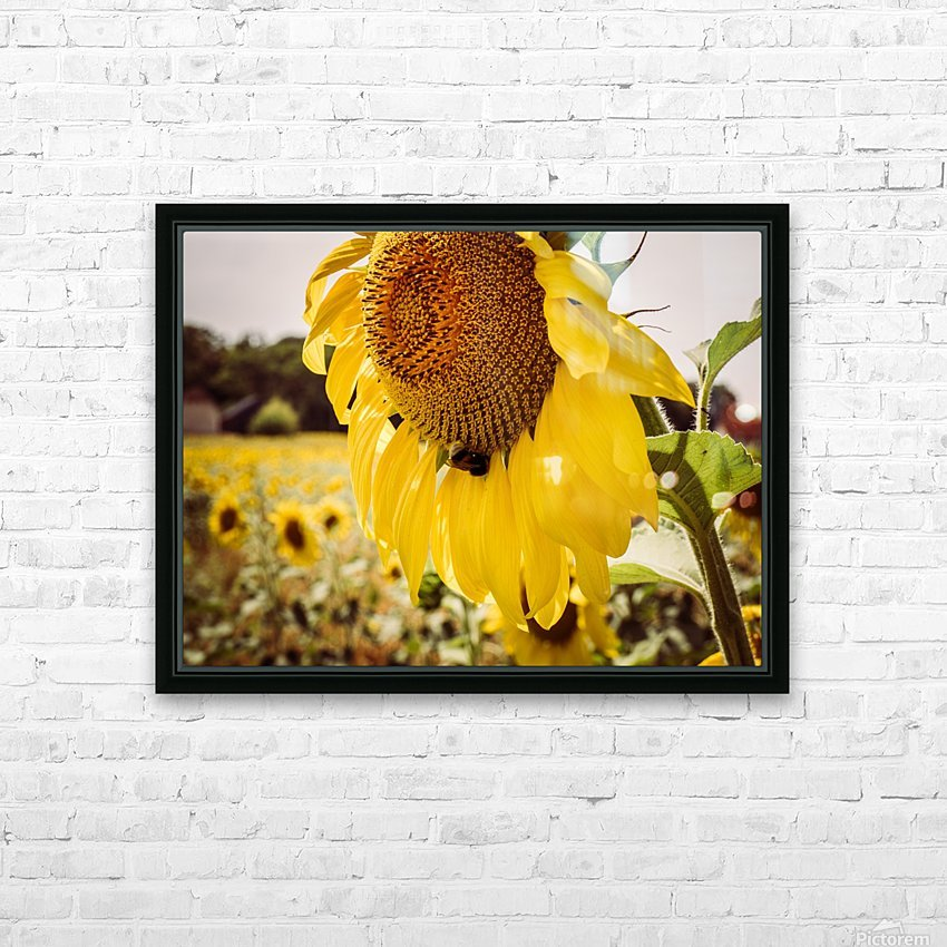 Sunflower with Bee HD Sublimation Metal print with Decorating Float Frame (BOX)
