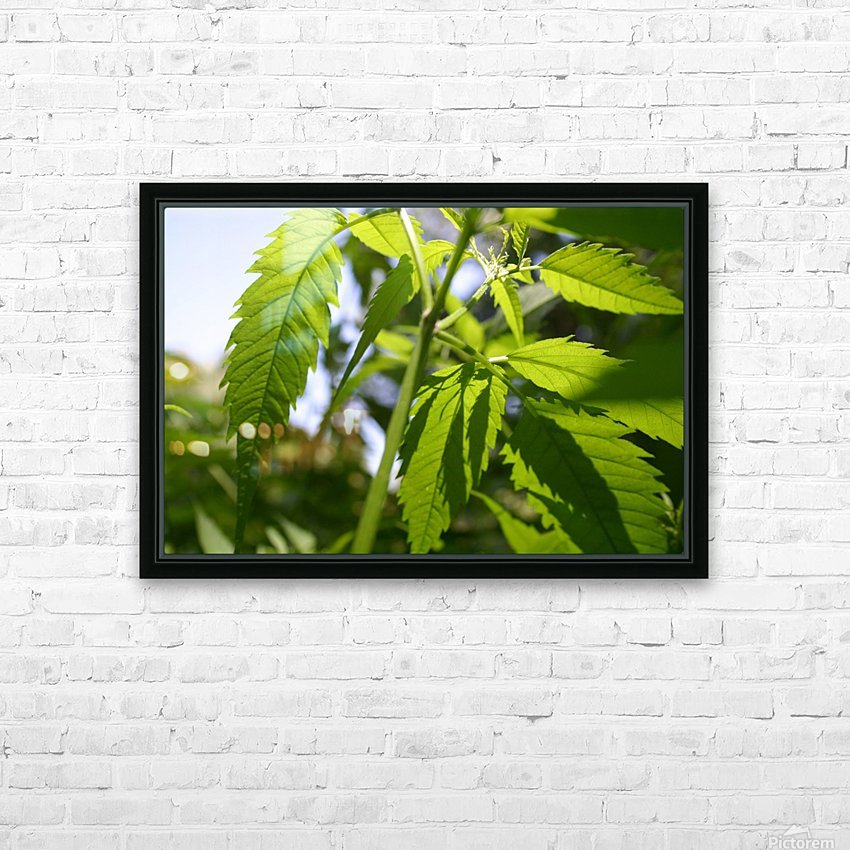leaf with light HD Sublimation Metal print with Decorating Float Frame (BOX)