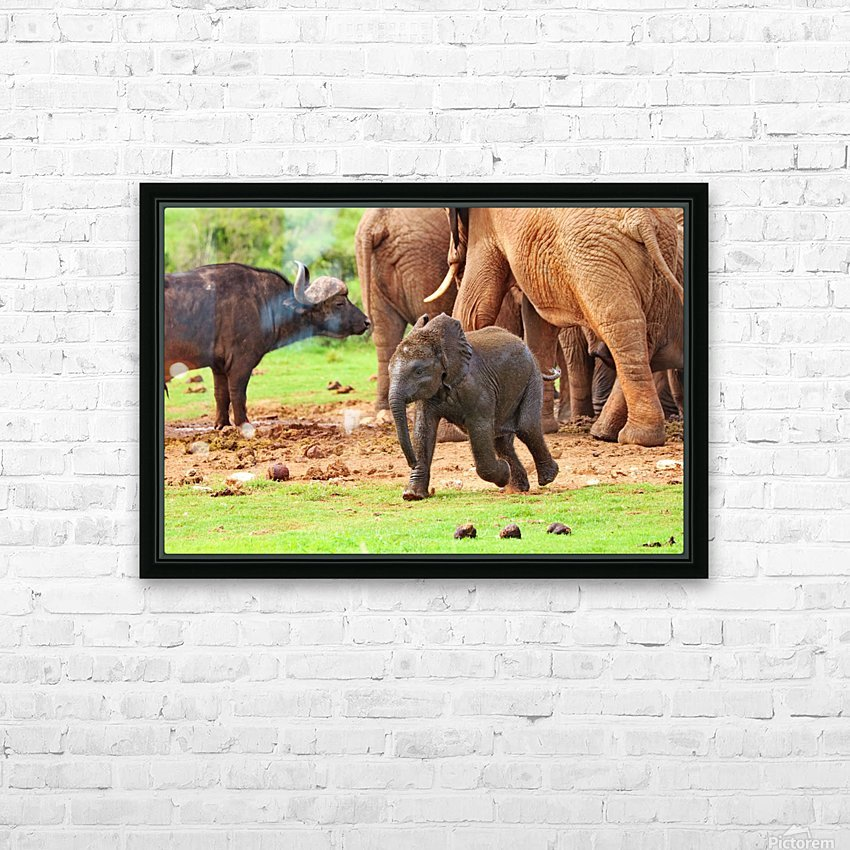 Elephant Baby 582 HD Sublimation Metal print with Decorating Float Frame (BOX)