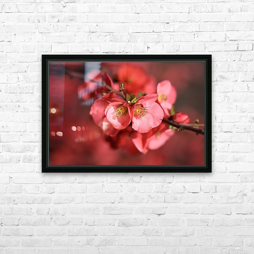 Flowering Quince Of Spring HD Sublimation Metal print with Decorating Float Frame (BOX)