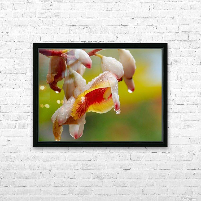 Flower Rain Drops 1 Andrea Bruns