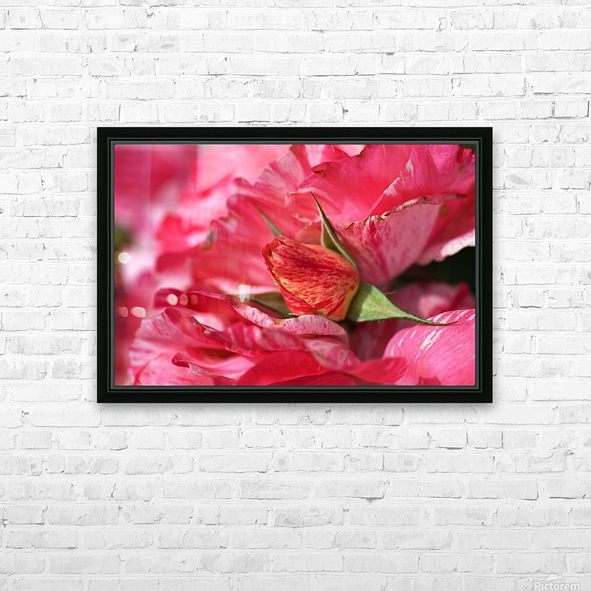 Rose Bud On My Petals HD Sublimation Metal print with Decorating Float Frame (BOX)