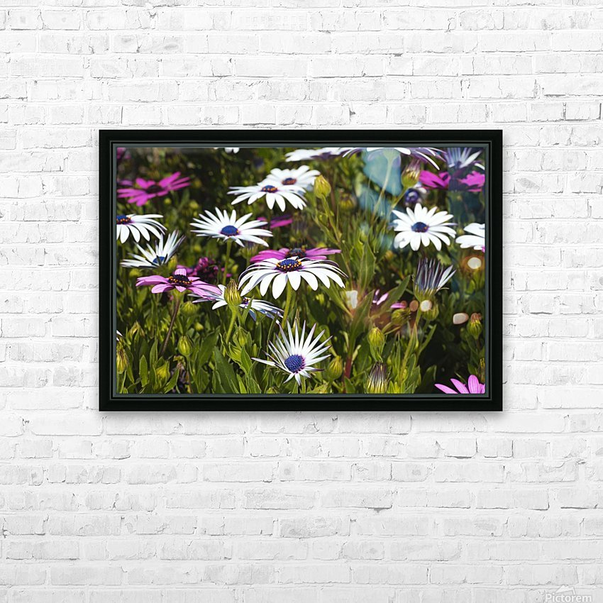 Daisies Of White And Pink HD Sublimation Metal print with Decorating Float Frame (BOX)