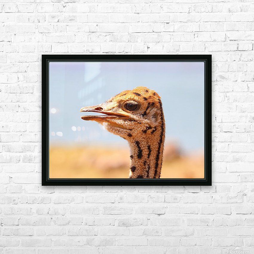 Baby Ostrich 5378 HD Sublimation Metal print with Decorating Float Frame (BOX)