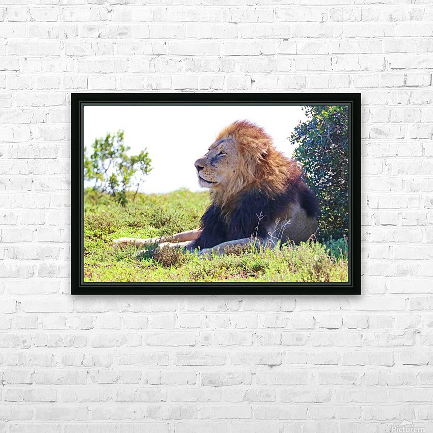 Lion Male in Addo 9240 HD Sublimation Metal print with Decorating Float Frame (BOX)