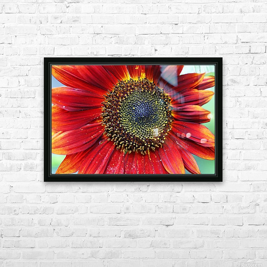 Red Sunflower With Yellow Tips HD Sublimation Metal print with Decorating Float Frame (BOX)