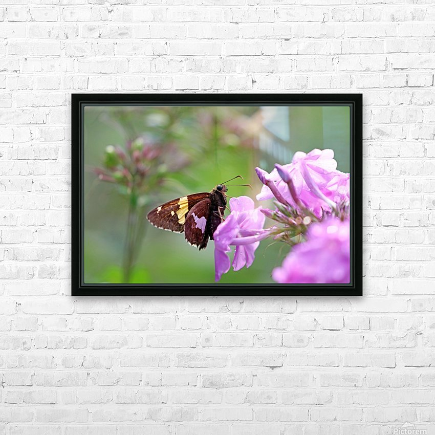 Silver Spotted Skipper HD Sublimation Metal print with Decorating Float Frame (BOX)