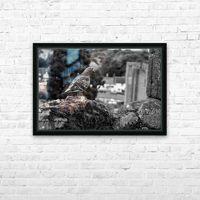 Black and White Pigeon HD Sublimation Metal print with Decorating Float Frame (BOX)
