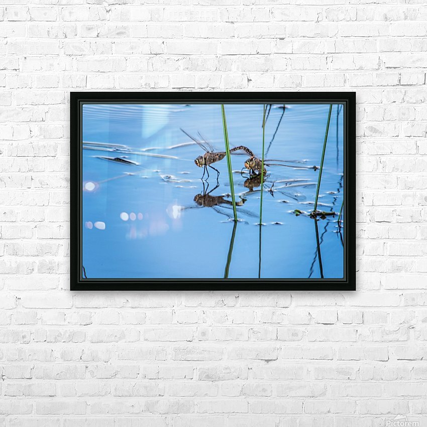 Dragonflies  HD Sublimation Metal print with Decorating Float Frame (BOX)