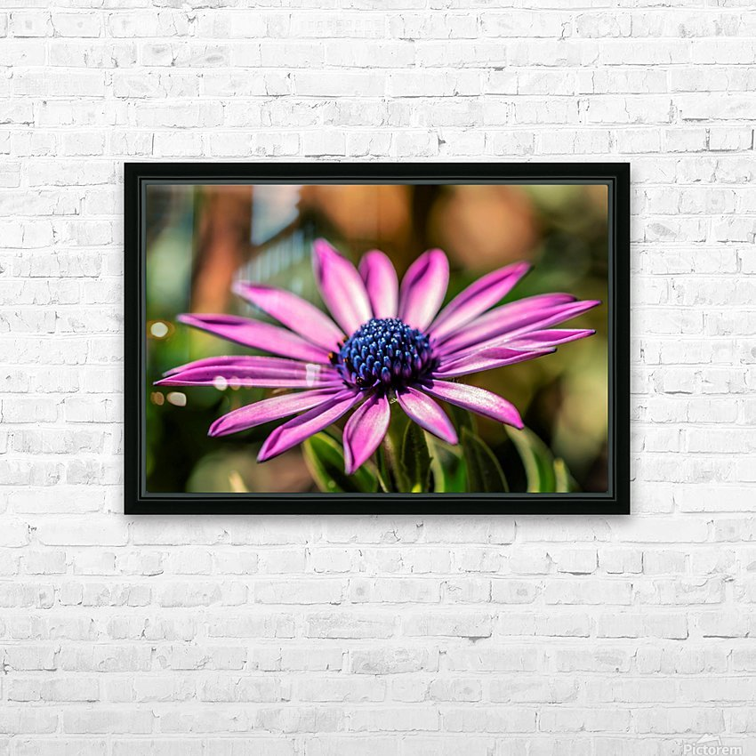 Daisy in Pink HD Sublimation Metal print with Decorating Float Frame (BOX)