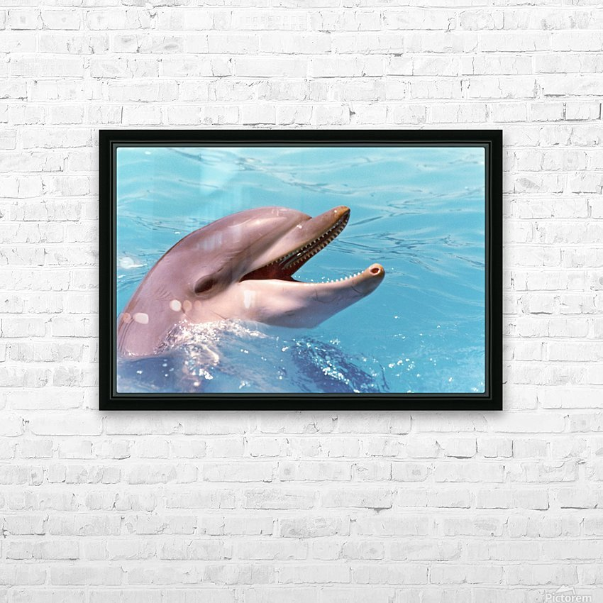 Happy Dolphin Photograph HD Sublimation Metal print with Decorating Float Frame (BOX)