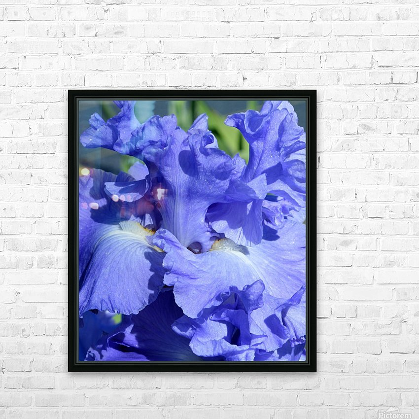 Metoleus Blue Bearded Iris HD Sublimation Metal print with Decorating Float Frame (BOX)