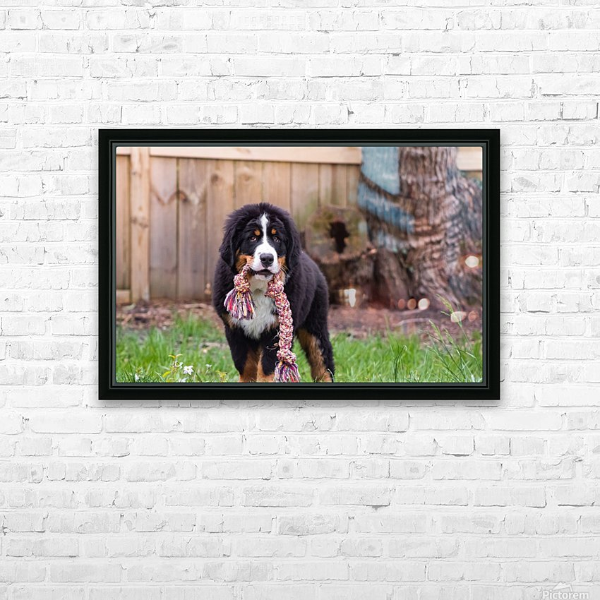 Bernese Mountain Dog Puppy 8 HD Sublimation Metal print with Decorating Float Frame (BOX)