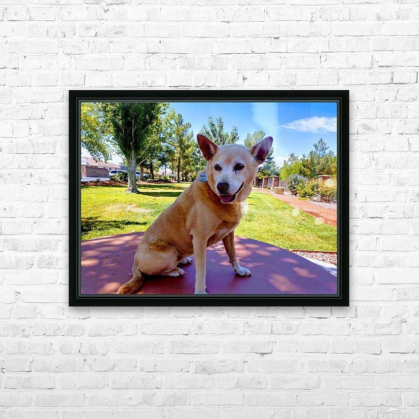 Carolina Dingo HD Sublimation Metal print with Decorating Float Frame (BOX)