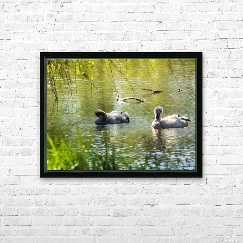 Cygnets HD Sublimation Metal print with Decorating Float Frame (BOX)