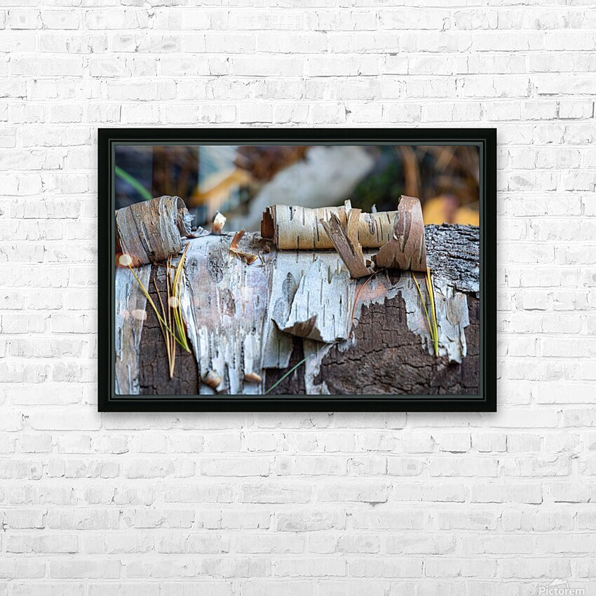 Fallen Birch HD Sublimation Metal print with Decorating Float Frame (BOX)