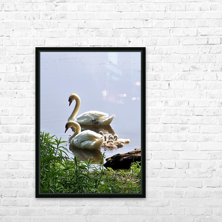 Swans and Sygnets on lake HD Sublimation Metal print with Decorating Float Frame (BOX)