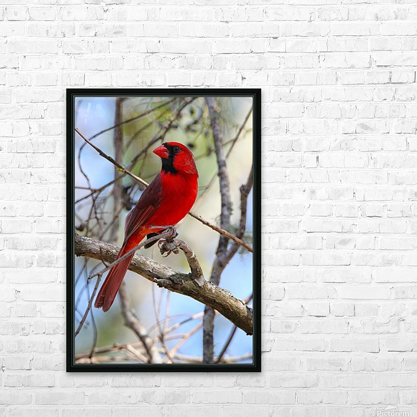Cardinal in tree HD Sublimation Metal print with Decorating Float Frame (BOX)